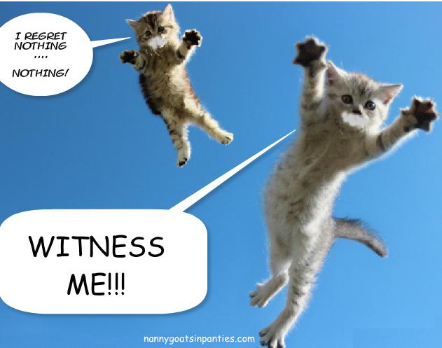 Foto di gattini: vi ho in mio potere