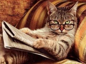 consigli-gatto-cervello-attivo