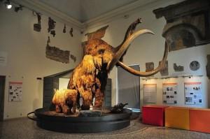 museo-di-scienze-naturali BG