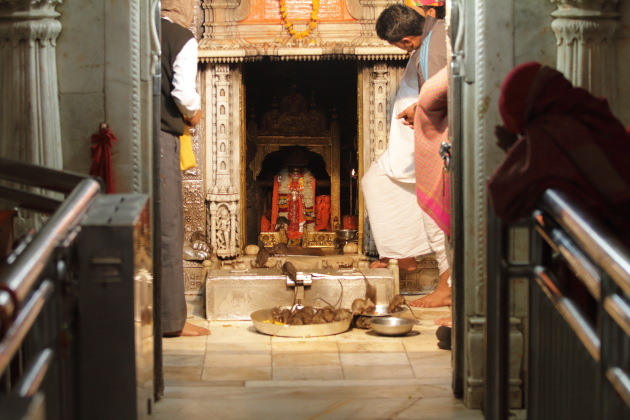 Karni Mata Temple - the rat temple of India