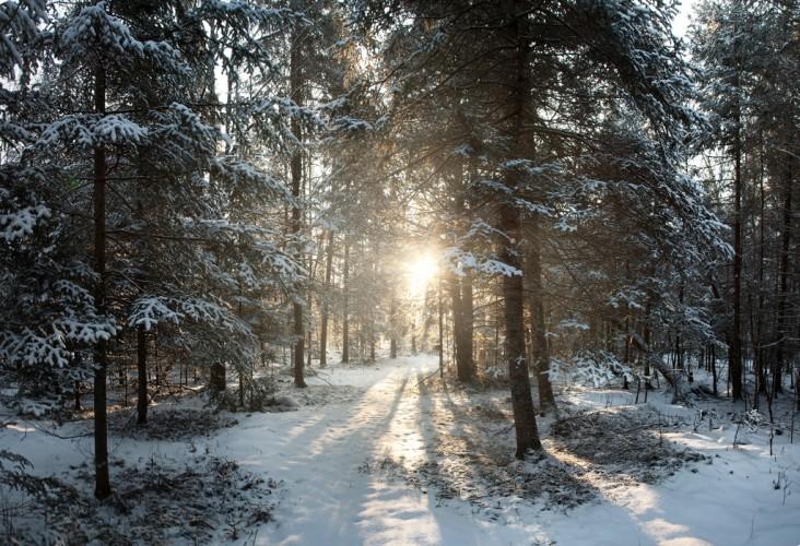 wisconsin winter wood