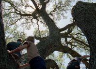 La musica degli alberi. Bartholomaus Traubeck