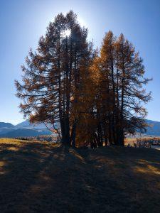 Foliage sulle Dolomiti