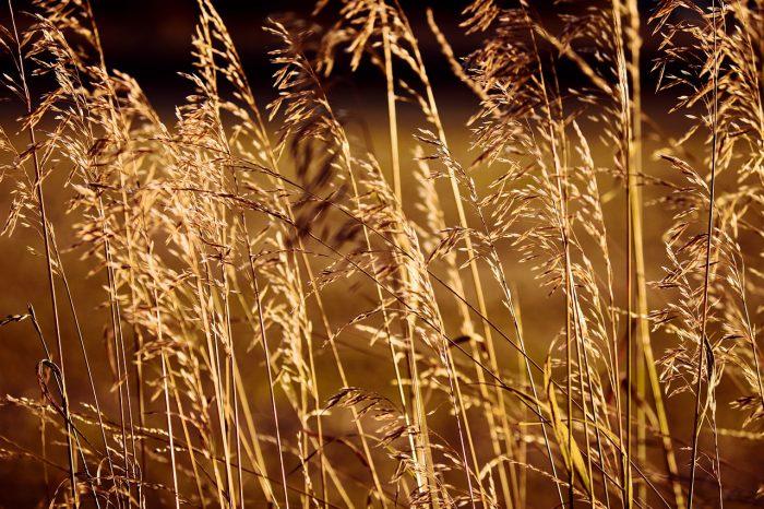 Sensazione, Rimbaud